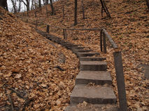 Höstgulingsidor och trappa i Kiev Fotografering för Bildbyråer