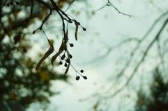 Hösthimmel och sidor royaltyfri fotografi
