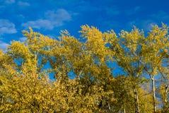 Hösthimmelfärger Arkivfoto