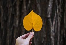 Hösthjärta formade bladet i handen på bakgrunden för trädskället arkivfoto
