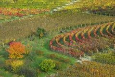 höstitaly piedmont vingårdar Arkivfoton
