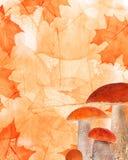 Höstlönnlöv- och champinjonbakgrund Arkivfoto