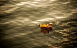 Höstlönnlöv på vattnet Arkivfoton