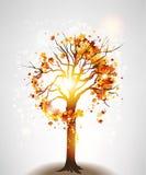 Höstlönnträd och solljus vektor illustrationer