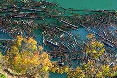 Höstlövverk och journaler som svävar i snickaren Lake, British Columbia, Kanada Royaltyfri Foto