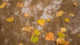 Höstlövverk på asfalten i parkera Arkivbild