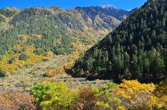 Höstlandskap av träd på Jiuzhaigou Royaltyfria Bilder