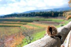 Höstlandskap av vingården med wood och italienska berg Royaltyfri Bild