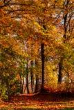 Höstlandskap, bana i gränden med träd Royaltyfri Bild