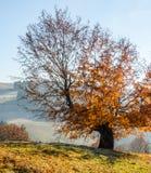 Höstlandskap, ett träd med apelsinsidor i förgrunden, t Royaltyfri Fotografi
