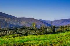 Höstlandskap, ett träd utan sidor som är iny på det gröna gräset, Royaltyfri Foto