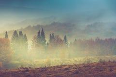 Höstlandskap i berg Färgrika träd i dimma och regn Fotografering för Bildbyråer