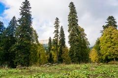 Höstlandskap i bergen av Abchazien Royaltyfri Bild