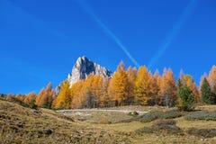 Höstlandskap i Dolomites, Italien Berg, granträd och framför allt lärker som ändrar färg som antar den typiska gula auten arkivbild