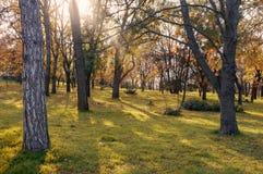 Höstlandskap i parkeraområdet. Fotografering för Bildbyråer