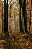 Höstlandskap i skogen Royaltyfria Bilder