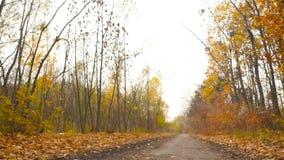 Höstlandskap i skogen som kameran flyttar till vänstersidan den höstliga dagen låter vara melankolisk yellow HD stock video