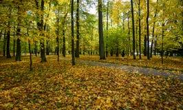 Höstlandskap i St Petersburg, Ryssland Fotografering för Bildbyråer