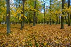 Höstlandskap i St Petersburg, Ryssland Arkivfoton