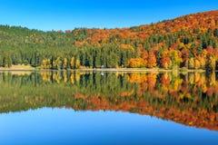 Höstlandskap med den färgrika skogen, St Ana Lake, Transylvania, Rumänien Royaltyfri Fotografi