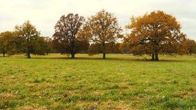 Höstlandskap med den orange hösteken i fältet lager videofilmer