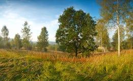 Höstlandskap med eken och björkar Arkivfoto