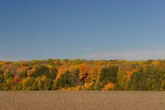 Höstlandskap med fält, träd och klar himmel Ryssland Fotografering för Bildbyråer