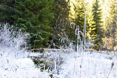 Höstlandskap med floden i frostig dag Arkivbild