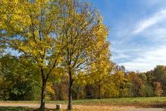 Höstlandskap med gula träd i South Park i stad av Sofia, Bulgarien royaltyfri bild