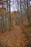 Höstlandskap med landsvägen i skogen Arkivfoto