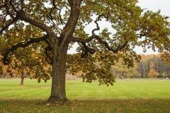 Höstlandskap med trädet arkivfoto