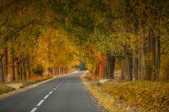 Höstlandskap med väg- och gulingträd arkivfoton