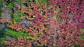 Höstlandskap på en tegelstenvägg Arkivbilder