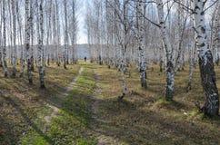 Höstlandskap på outskien Arkivfoto