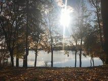 Höstlandskap som är härligt med träd och gula sidor på sjön mot den blåa himlen på en solig dag arkivbild
