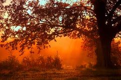 Höstlandskap, träd i misten på gryning arkivbild