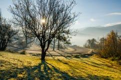 Höstlandskap, träd i panelljuset av solen, leda för väg Arkivbilder