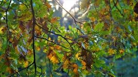 Höstlandskapet trädet är gulnade sidor 2 Arkivfoto