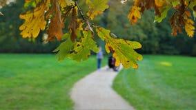 Höstlandskapet trädet är gulnade sidor Royaltyfria Foton