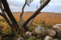 Höstlandskapträd arkivfoto