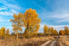 Höstlandsväg bland träd i fält royaltyfri bild