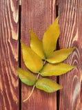 Höstleaf på träbakgrund royaltyfri fotografi