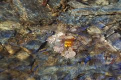 höstleaf under vatten Arkivbilder