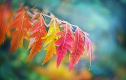 Höstleafes på suddig bakgrund, mycket grund fokus Colorfu Royaltyfri Fotografi