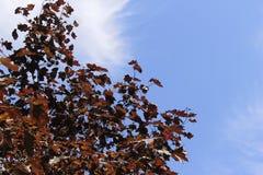 Höstleafes på trädet Arkivfoton