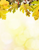 höstleaves Royaltyfri Bild