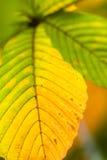 höstleaves Fotografering för Bildbyråer