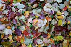 Höstleaves på gräset Arkivfoton