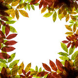 Höstlig bakgrund med färgrika blad och ställe för text Royaltyfri Foto