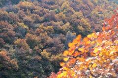 Höstlig bergskog Arkivbild